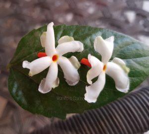 Parijat flowers